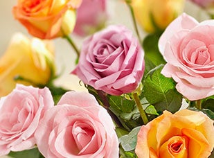 June Birth Flower - Roses