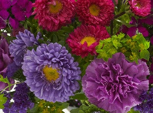September Birth Flower - Aster