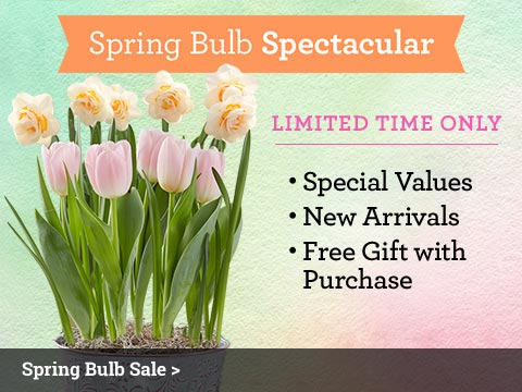 Spring Bulbs Spectacular