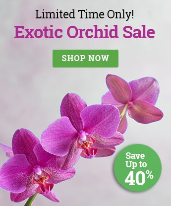Exotic Orchid
