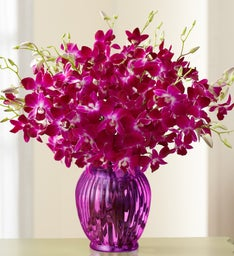 Exotic Breeze™ Orchids, 15-30 Stems
