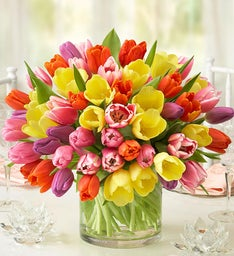 Assorted Tulips, 60 Stems