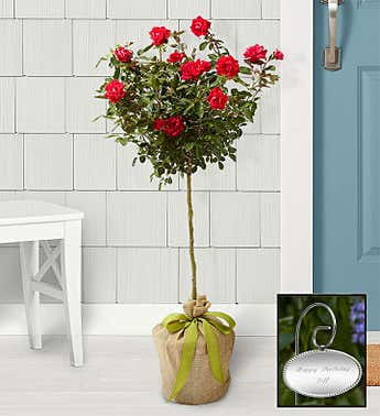 Knockout Rose Topiary