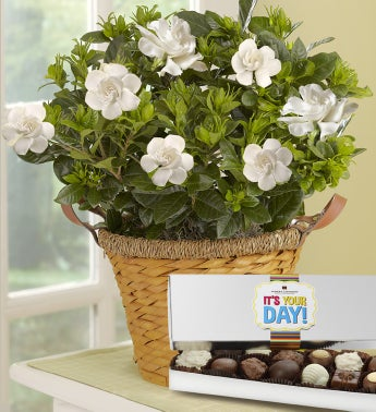 It's Your Day Gardenia Basket