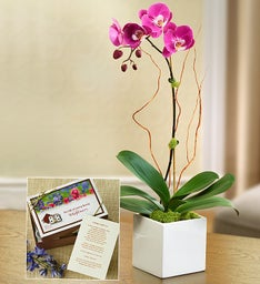 Majestic Orchid for Sympathy