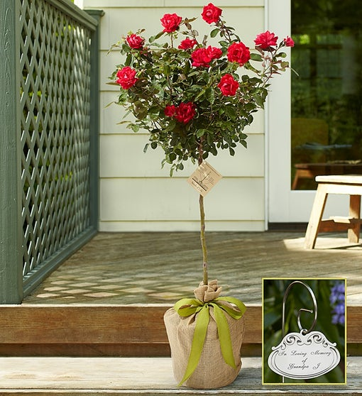 Knockout Rose Topiary for Sympathy