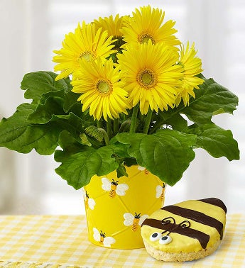 Happy Bee Gerbera Daisy