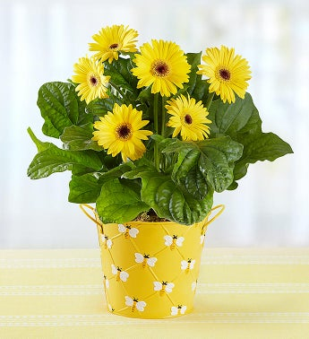 Cheap Flowers Delivery Online from $19 99 | 1800Flowers