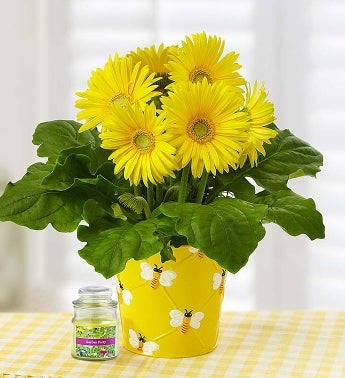 Happy Bee Gerbera Daisy + Free Candle