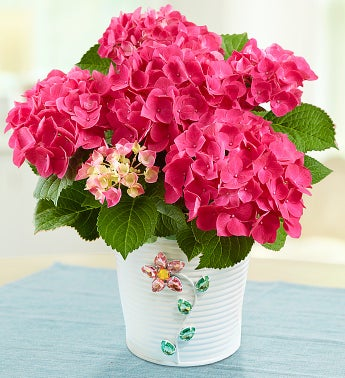 Pink Hydrangea In Jeweled Planter