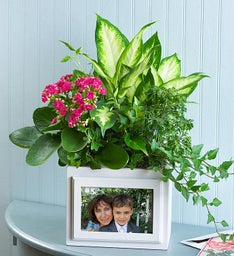 Keepsake Photo Box Garden