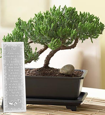 Juniper Bonsai for Dad