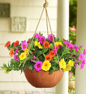 Proven Winners® Candyland Dish Garden
