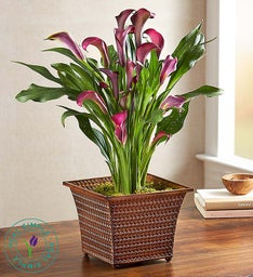 Fall Flame Calla Lily by Real Simple®