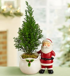 Santa's Magical Cypress Tree