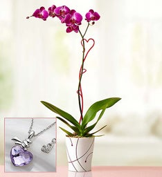 Ties of Love Phalaenopsis Orchid