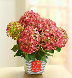 Love You to the Moon and Back Hydrangea