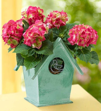 Bird House of Blooms®