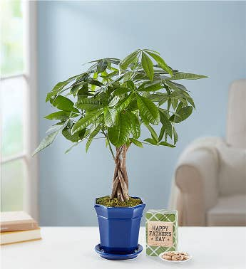 Father's Day Money Tree Plant