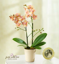 Artistic Splendor Orchid + Free Shipping