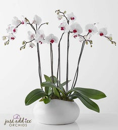 Simply Elegant Orchid Garden + Free Shipping