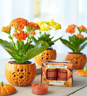 Festive Fall Pumpkin Trio