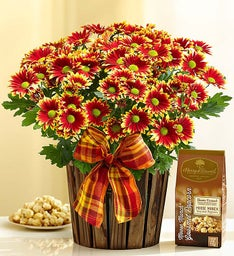 Autumn Harvest Mum