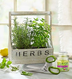 Herb Garden + Free Candle