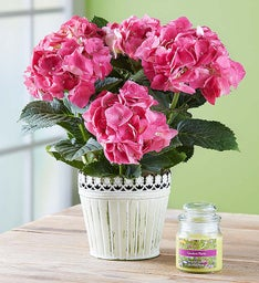 Summer Fun Hydrangea + Free Candle