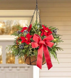 Festive Evergreen Hanging Basket