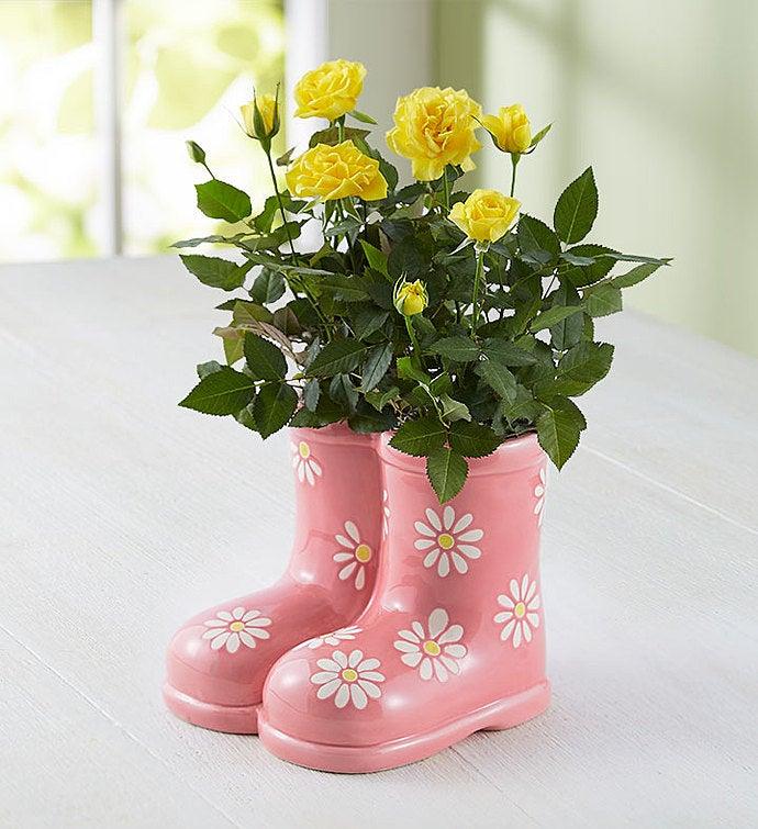rain boot roses - Mini Roses Care Indoor