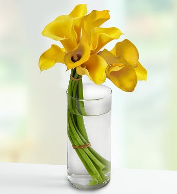 Captivating Calla Lilies™