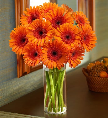 Orange Gerbera Daisy Bouquet