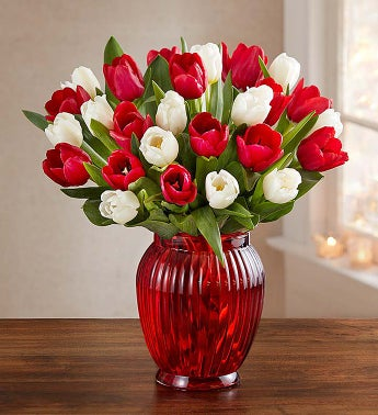 Holiday Tulips, 15-30 Stems