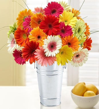 Happy Gerbera Daisies, 12-24 Stems