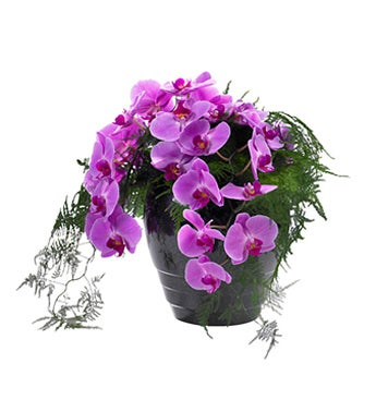 Phalaenopsis Urn Decoration