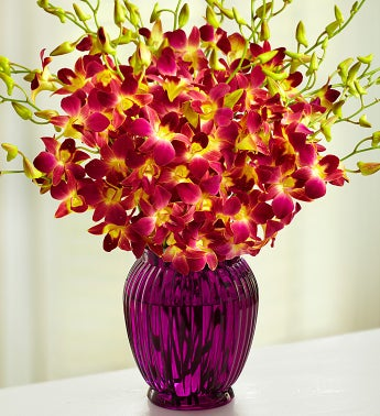 Tropical Breeze Orchids, 10-20 Stems