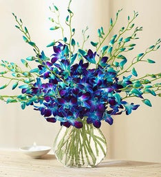 Ocean Breeze Orchids + Free Vase