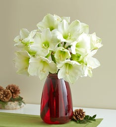 Winter Amaryllis Bouquet