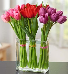 Modern Tulips for Your Valentine