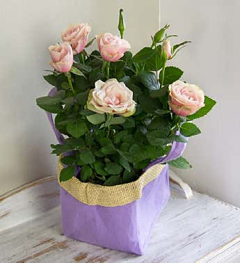 Pink Rose Gift Bag Bouquet
