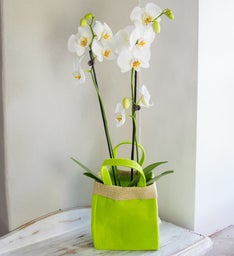 White Orchid Gift Bag Bouquet