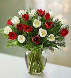Jolly Holiday Tulips, 20 Stems + Free Vase