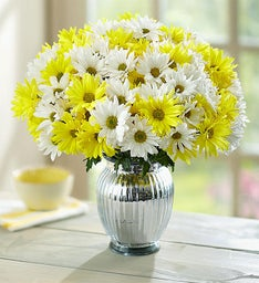 Yellow & White Daisies: Buy 12, Get 12 Free