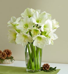 White Amaryllis for Sympathy