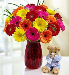 Get Well Gerbera Daisies + Bearington® Bear