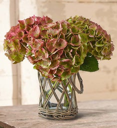 Fresh Cuts™ Rustic Beauty Hydrangea