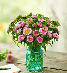 Fresh Cuts™ Pink Matsumoto Aster, 10-20 Stems