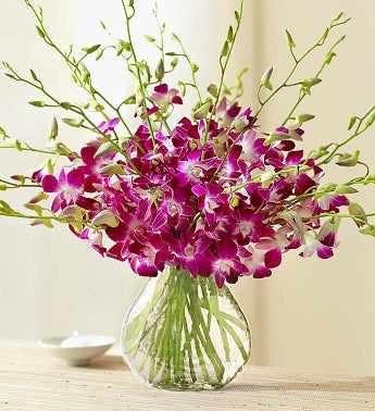 Exotic Breeze™ Orchids