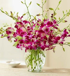Exotic Breeze™ Orchids + Free Vase